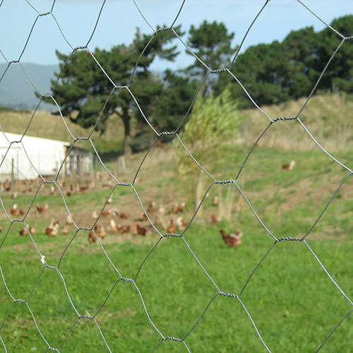50mm Roof Wire Netting Hexagonal used as chicken wire to contain chickens