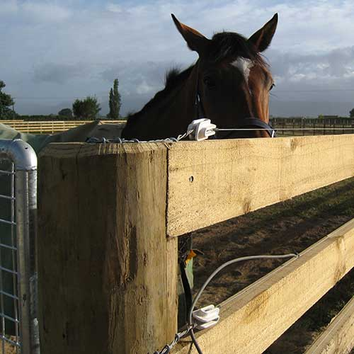 Coiled Wire in a horse fence